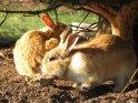 Zwei Kaninchen unter einem Tannenbaum