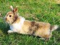 In die Länge gezogenes Kaninchen