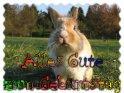 Geburtstagskarte mit einem Kaninchen