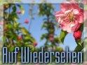 Auf Wiedersehen - Grusskarte mit Apfelblüte