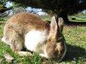 Kaninchen mit geschlossenen Augen