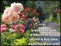 So wie die Rosen blühen,  so blühe stets Dein Glück -  und siehst du Rosen blühen,  so denke  stets an mich zurück!