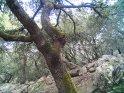 Dieses Kartenmotiv ist seit dem 27. August 2005 in der Kategorie Puig de Teix (Mallorca).