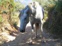 Pferd geht auf einem Wanderweg spazieren