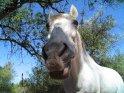 Pferd schaut von oben herab in die Kamera