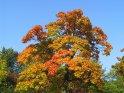 Baum in herbstlichen Farben