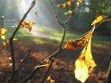 Herbstblatt an einem Zweig