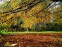 Herbstfoto mit einem Meer an herabgefallenen bunten Blättern unter herbstlich gefärbten Ästen darüber.