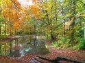 Teich in den Göttinger Schillerwiesen im Herbst