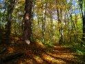 Herbstlicher Waldweg    Dieses Motiv finden Sie seit dem 28. Oktober 2005 in der Kategorie Herbstlandschaften.