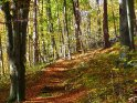 Herbstlicher Waldweg    Dieses Motiv findet sich seit dem 28. Oktober 2005 in der Kategorie Herbstlandschaften.