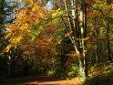 Dieses Kartenmotiv ist seit dem 28. Oktober 2005 in der Kategorie Herbstlandschaften.