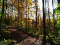 Herbstlicher Waldweg mit über den Weg verlaufenden Schatten der Bäume    Dieses Kartenmotiv wurde am 28. Oktober 2005 neu in die Kategorie Herbstlandschaften aufgenommen.