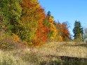 Farbenfrohe Waldkante