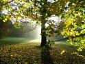 Bäume und Blätter im herbstlichen Morgenlicht