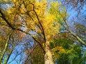 Dieses Kartenmotiv ist seit dem 30. Oktober 2005 in der Kategorie Herbstlandschaften.