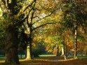 Herbstlich buntes Blätterdach    Dieses Kartenmotiv ist seit dem 30. Oktober 2005 in der Kategorie Herbstlandschaften.