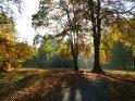 Hherbstlich gefärbter Baum wird von Sonnenstrahlen umgeben    Dieses Motiv findet sich seit dem 30. Oktober 2005 in der Kategorie Herbstlandschaften.