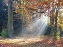 Herbstszene mit Sonnenstrahlen, die durch die Bäume brechen