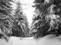 Die verschneiten Tannen am Hang des Jedlová Berges (Tannenberg)