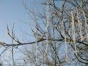 Rauhreif an einem Ast mit herbahängenden Zweigen