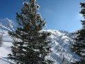 Verschneite Tanne mit dahinter liegendem Hügel und Bergen im Hintergrund.