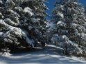 Zwischen den verschneiten Tannenbäumen sieht man im Hintergrund einen ebenfalls schneebedeckten Berg.