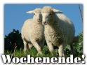 Karte zum Wochenende mit zwei Schafen als Motiv