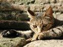 Katze vor einer Mauer