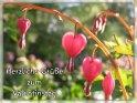 Herzliche Grüße zum Valentinstag    Dieses Motiv findet sich seit dem 22. April 2005 in der Kategorie Valentinstag.