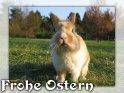 Frohe Ostern    Dieses Kartenmotiv wurde am 22. April 2005 neu in die Kategorie Tierische Osterkarten aufgenommen.