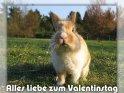 Alles Liebe zum Valentinstag    Dieses Kartenmotiv ist seit dem 22. April 2005 in der Kategorie Valentinstag.