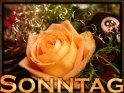 Sonntagskarte mit einer Rose