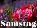 Samstagskarte mit Lavendel und einer roten Rose im Hintergrund