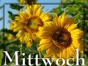 Mittwoch - Karte mit Sonnenblumen