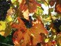 Dieses Motiv findet sich seit dem 27. August 2006 in der Kategorie Herbstfotos.