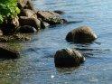 Zwei vom Wasser umspülte und abgerundete Steine.