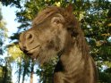Pony aus der Froschperspektive