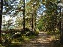 Von Tannen umgebener Waldweg