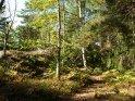 Waldweg    Aus der Kategorie Grinda (Schweden)