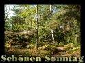 Sonntagskarte mit einem Waldweg mit dem Text Schönen Sonntag
