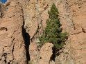 Diese Pinie hat es geschafft in dieser Felsenwüste zu überleben.