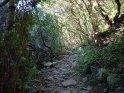 Durch den Wald führender Wanderweg.