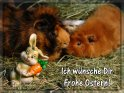 Ich wünsche Dir Frohe Ostern!    Dieses Kartenmotiv wurde am 18. März 2007 neu in die Kategorie Tierische Osterkarten aufgenommen.