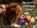 Ups, es ist ja schon wieder Ostern    Dieses Motiv findet sich seit dem 18. März 2007 in der Kategorie Tierische Osterkarten.