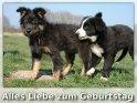 Geburtstagskarte mit einem Hunden: Alles Liebe zum Geburtstag