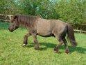 Pony läuft quer durchs Bild