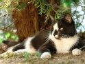Katze liegt unter einem Baum
