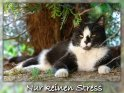 Nur keinen Stress  Grusskarte mit liegender Katze