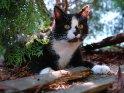 Katze unter einem Baum
